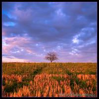 Broadening Horizon by allym007