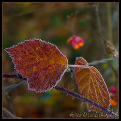 Autumn Frost by allym007