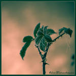 Frost in Green by allym007
