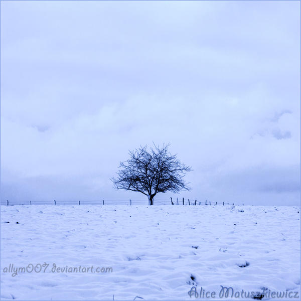 Winter Solitude by allym007