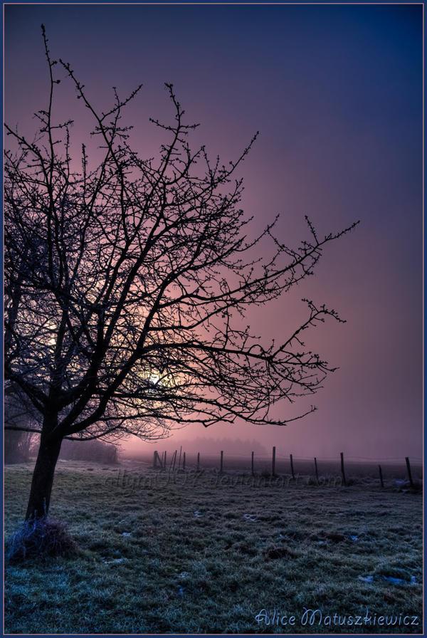 Winter Sunrise by allym007
