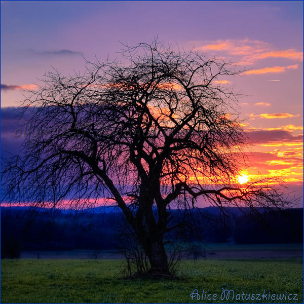 Surreal Colors Of Sunset by allym007