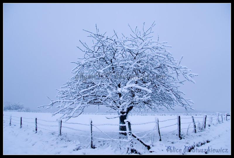 Snowy Tree by allym007