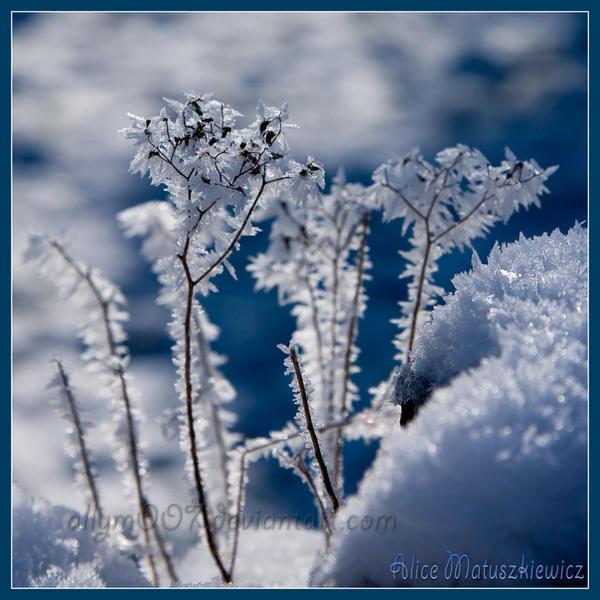 Hibernation by allym007
