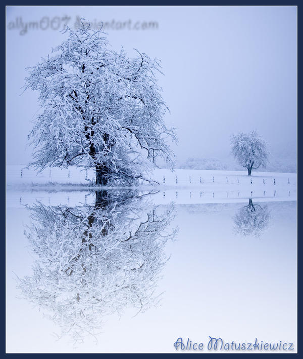 Reflections Of Winter by allym007