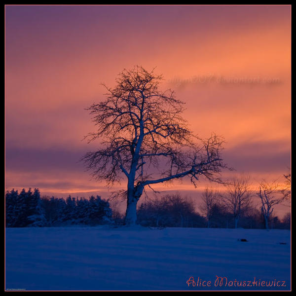 An Orange Sky by allym007