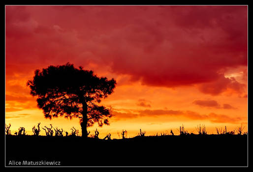 Silhouettes on a Red Sky