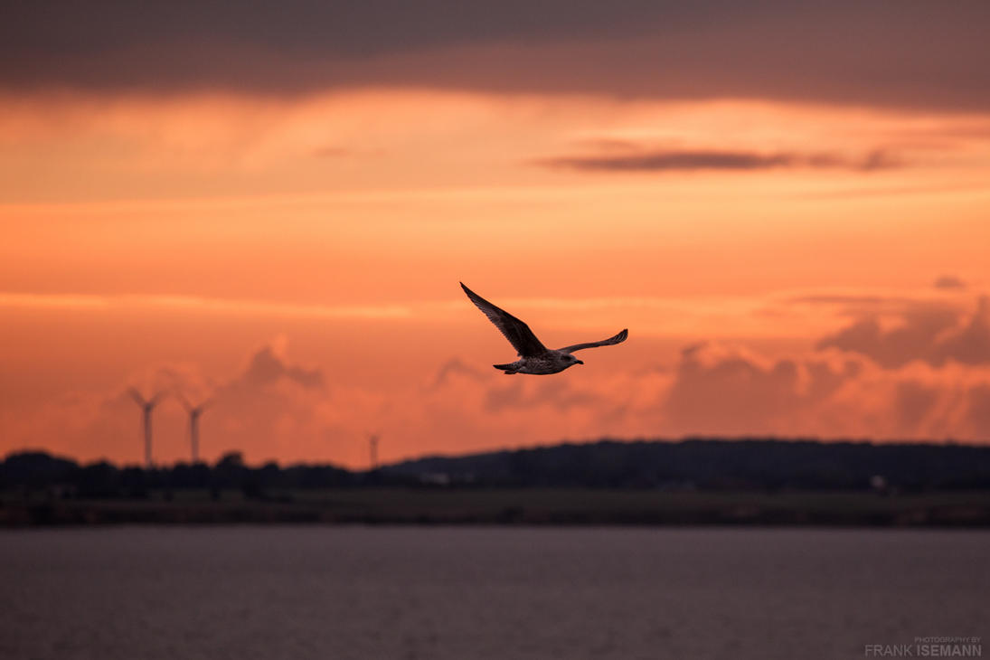 Seagull Sunset by fti7