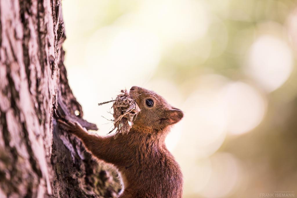 Squirrel #2 by fti7