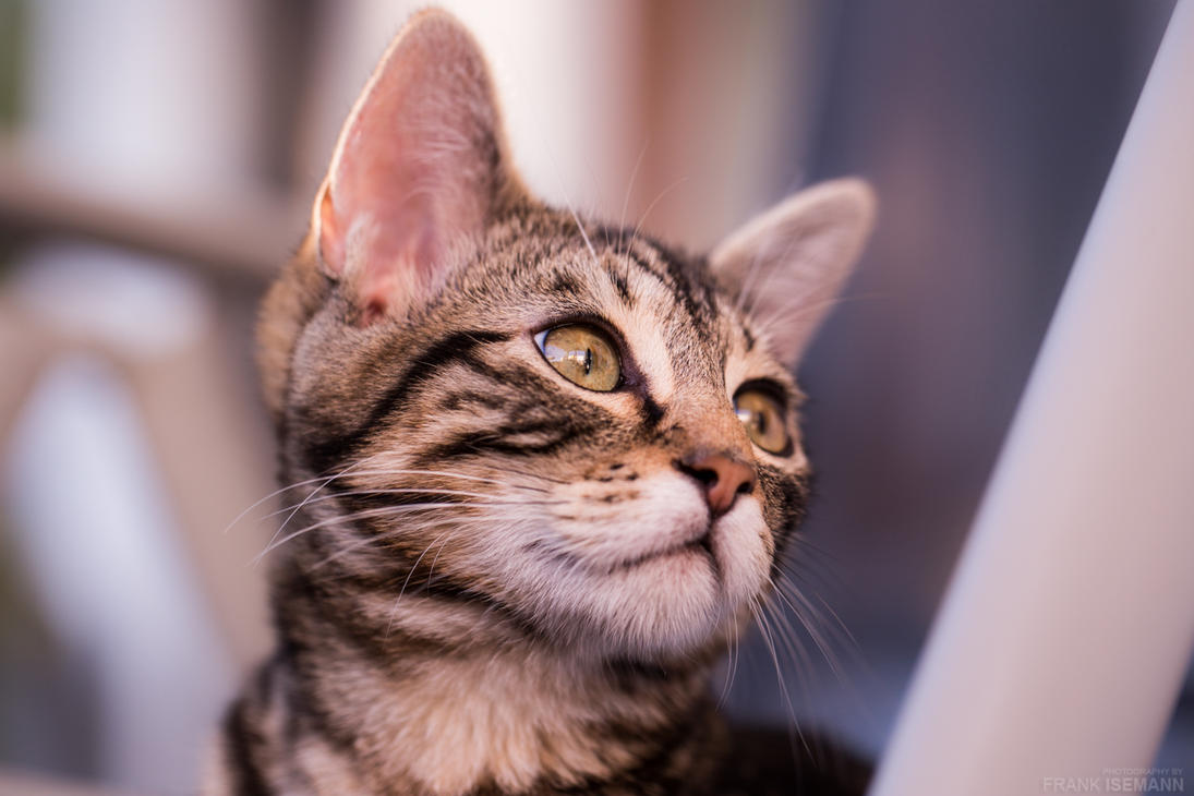 Findus the Cat by fti7