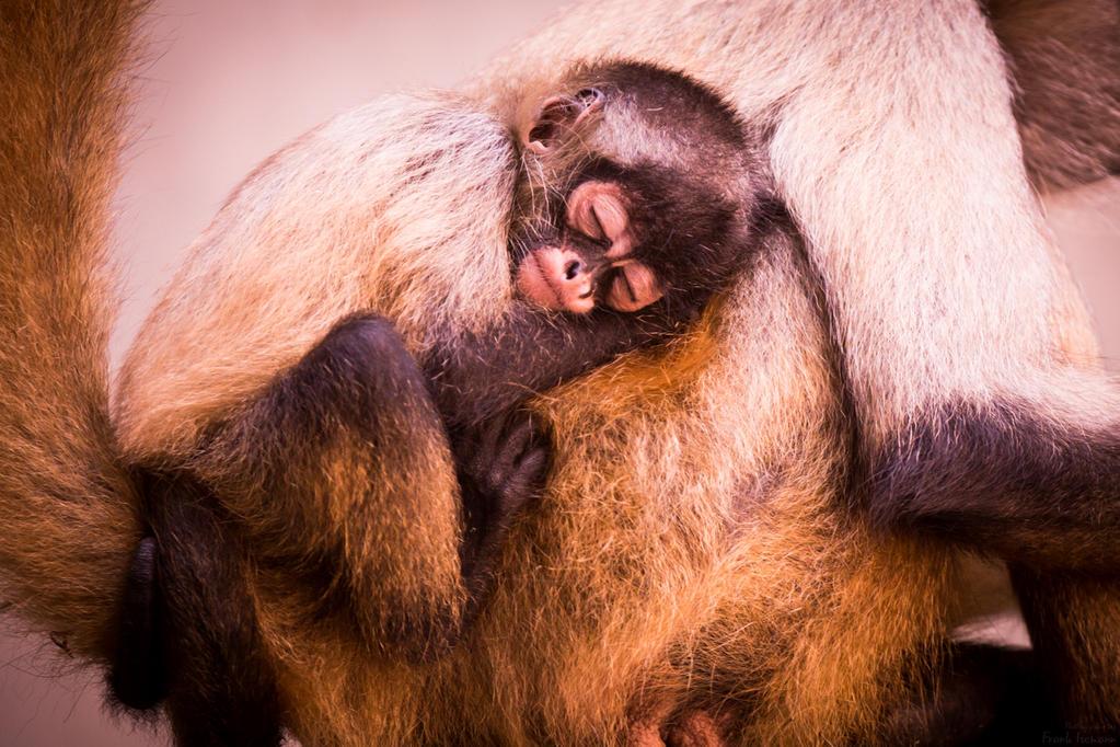 Sleeping Baby Monkey #2 by fti7