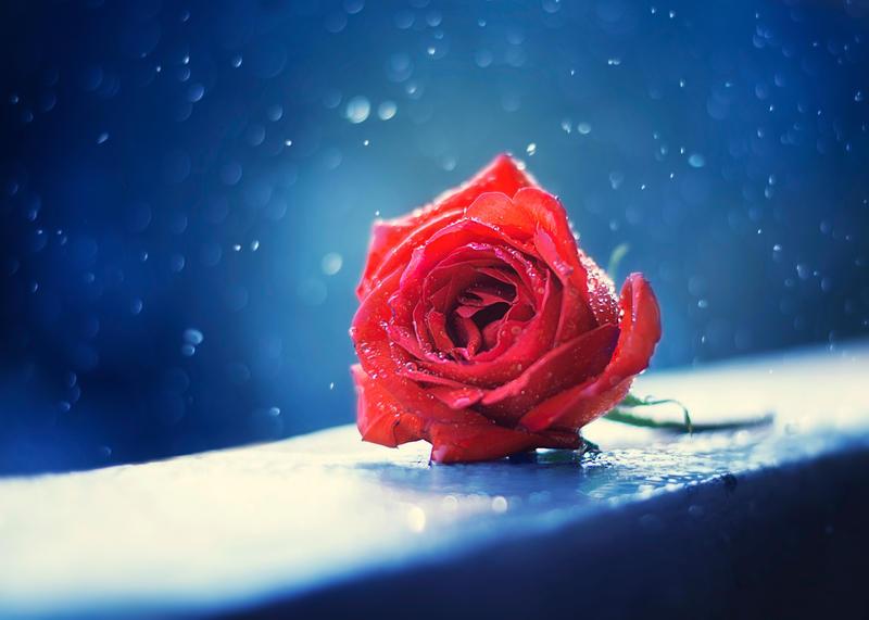 Valentine by arefin03