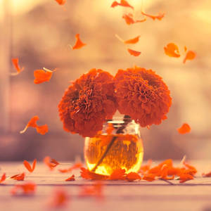 Marigold Days by arefin03