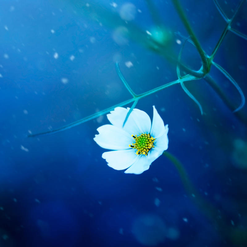 Snow Queen by arefin03