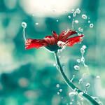 Lucid Dream by arefin03