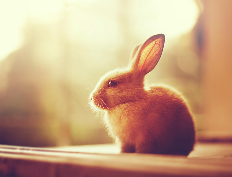 Autumn Bunny by arefin03