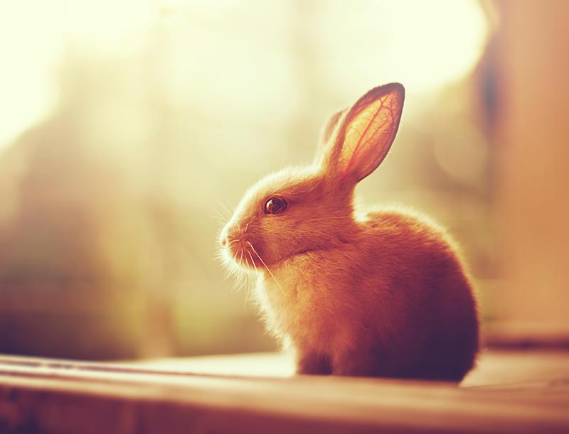 Autumn Bunny By Arefin03 On Deviantart