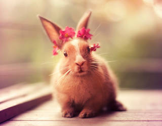 Don't I look beautiful by arefin03