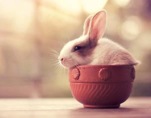 Bunny Tea