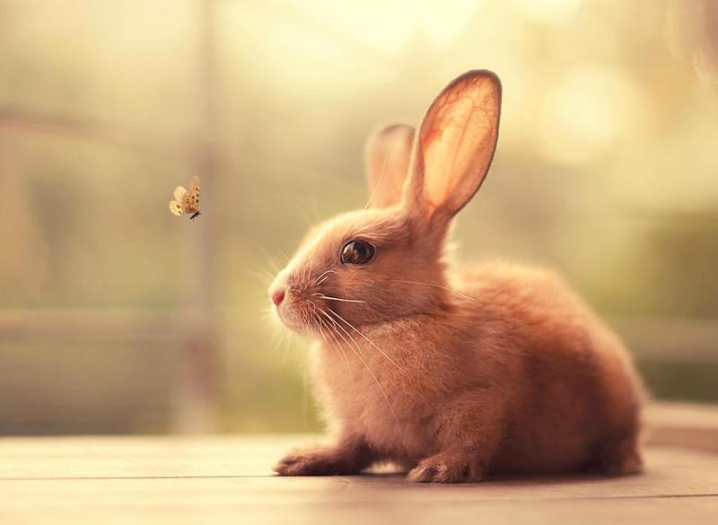 картинки милых кроликов и котят