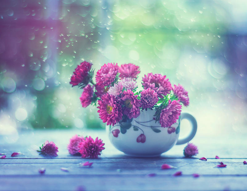 Cup of Spring by arefin03