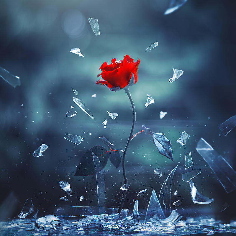 Love Wallpaper Deviantart : Most Beautiful Roses favourites by Lilyas on DeviantArt