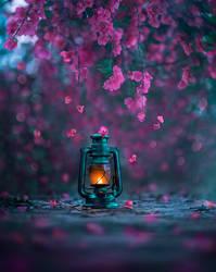 Light of Spring