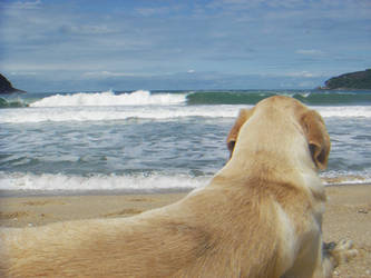 Dogs Don't Surf by calelogan