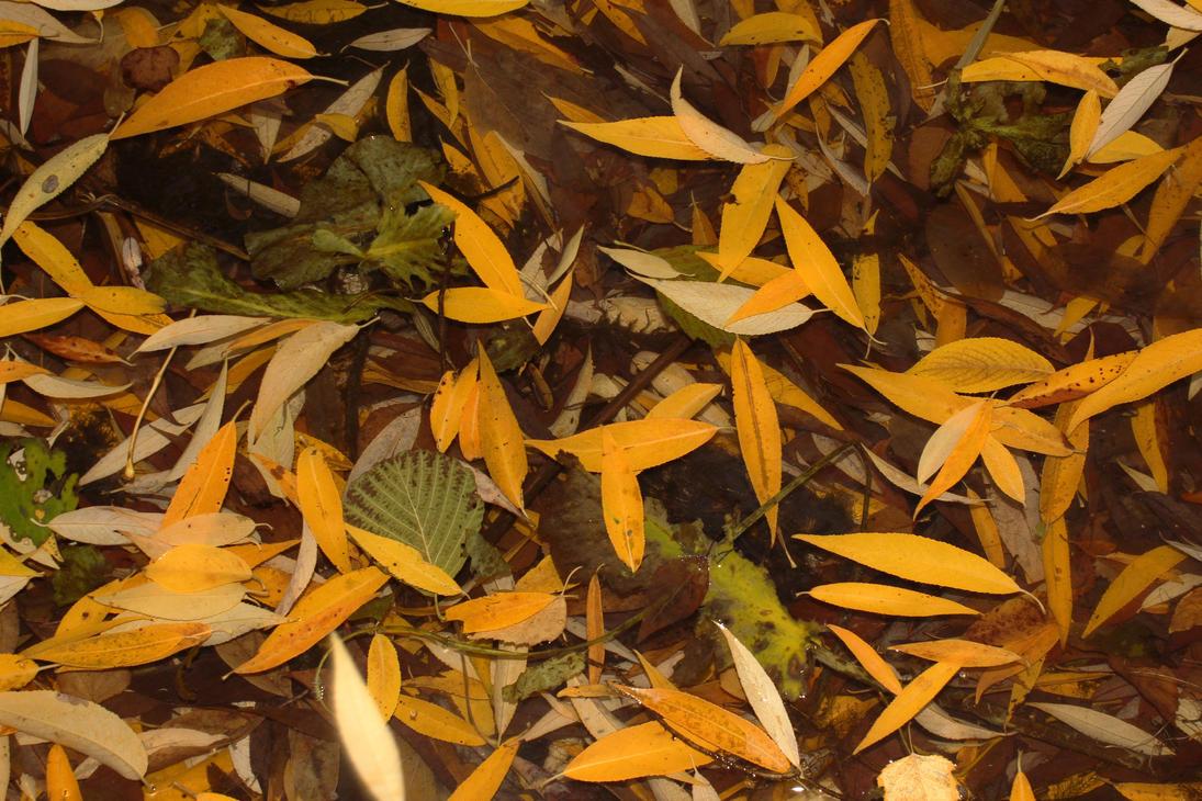 Autumn leaves by Mafon