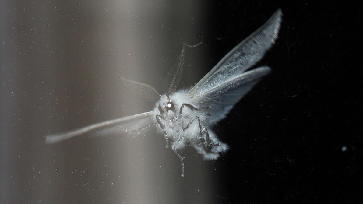 Moth by Mafon