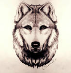 Stay Strong My Dear Wolf