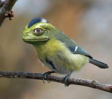 FrogBird by WaltervanSanten