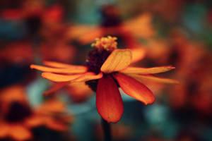 autumn flowers by prettyfreakjesper