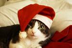 christmas kitty by prettyfreakjesper