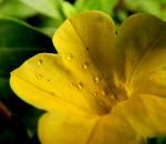From The Garden... 7 by Wilhelmine