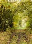 Path To Nowhere by Wilhelmine