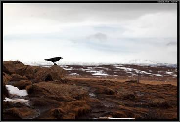 Crow by Miuquz