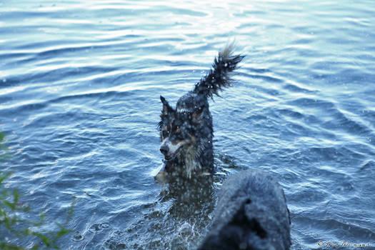 Wet dog is wet