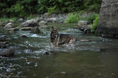 Helmi in the rapids