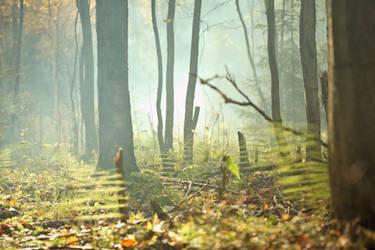 Foggy autumn forest by Miuquz