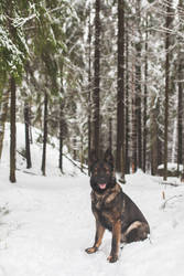 Ellys in a snowy forest
