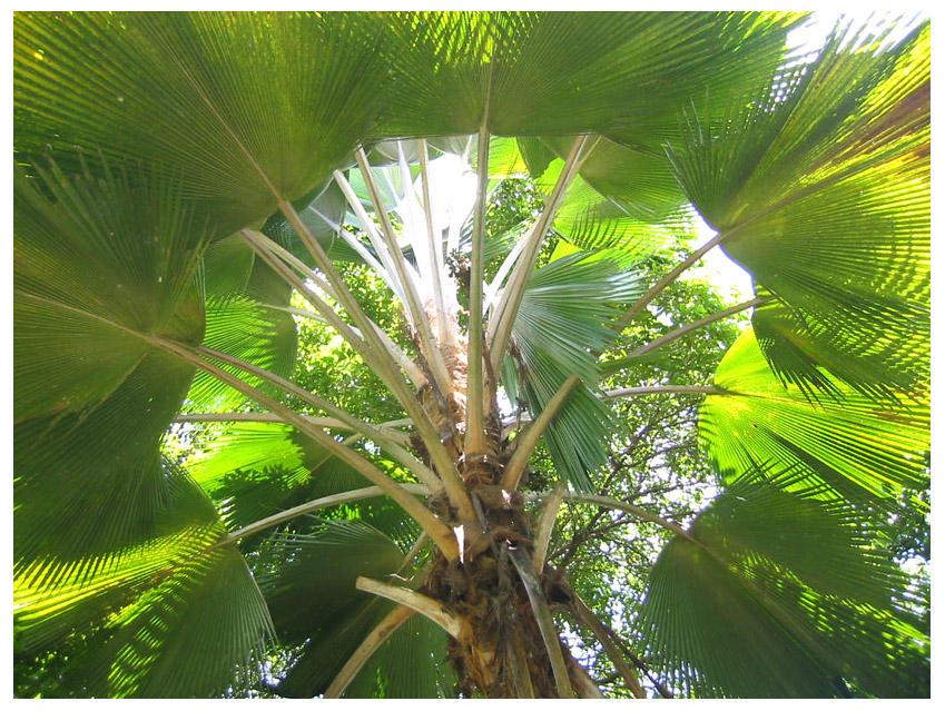 Under the Anahaw Leaf by dkids on DeviantArt