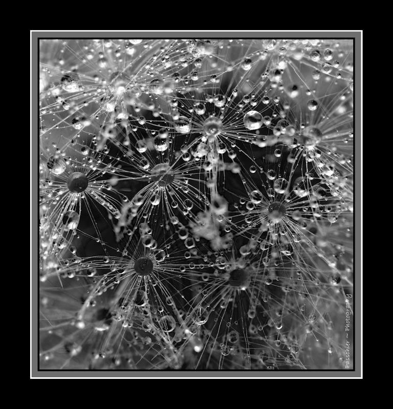 Water Atoms by DPasschier