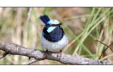 Little Bird by DPasschier