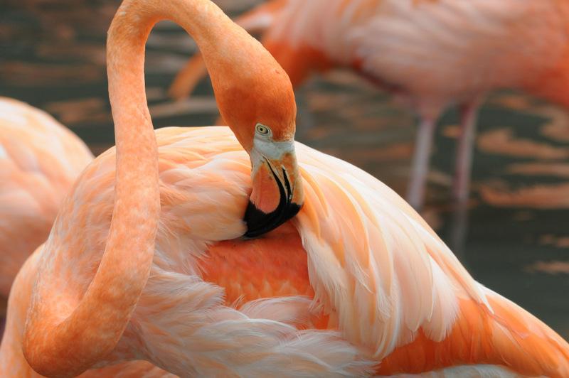 Pink Flamingo.8195 by DPasschier