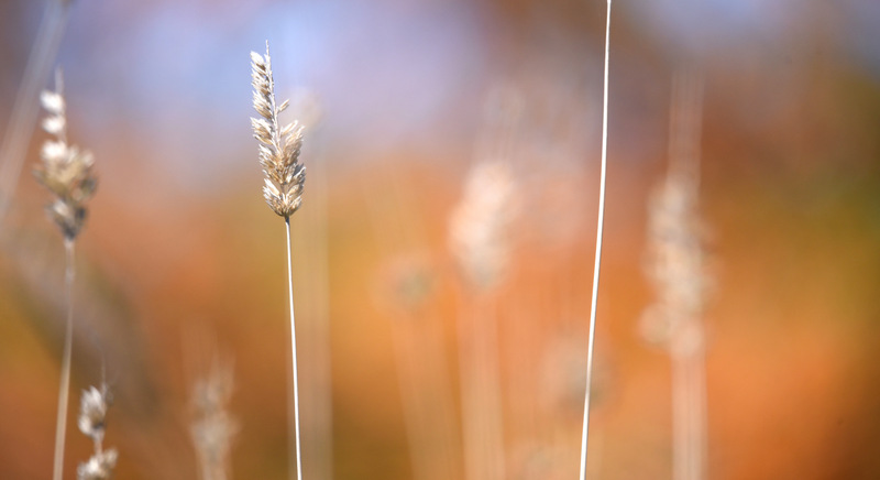 The Colours In The Grass 0764.2 by DPasschier