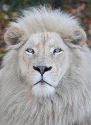 White Lion 2964b by DPasschier