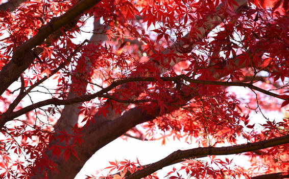 Leaves of Fire 4813-002
