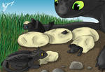 Night Fury Hatchlings