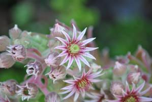 Bursting Pink Flowers